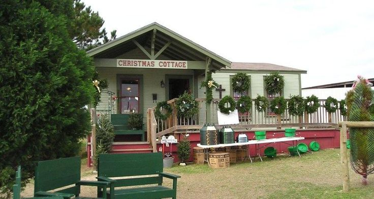 Elgin Christmas Tree Farm.Christmas Tree Farm Elgin Cedar Park Texas Living