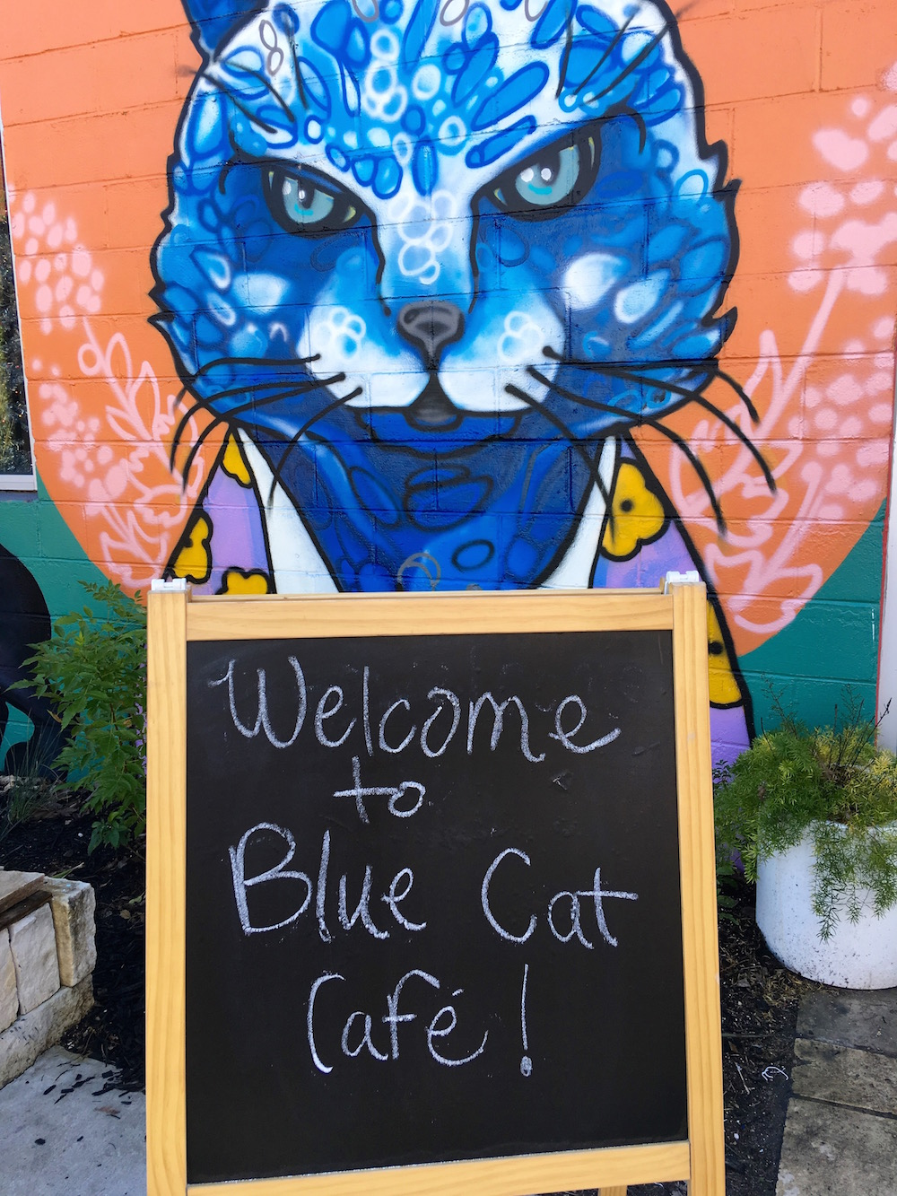 Cafe Blue Downtown Austin Tx
