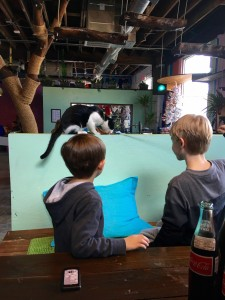 Blue Cat Cafe in Austin, Texas is a fun place to visit cute kitties and help get them adopted.