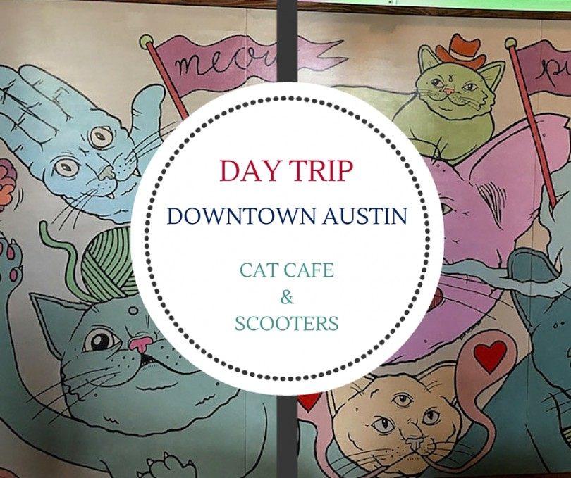 Enjoy a fun Day Drip from Cedar Park to Downtown Austin to visit the Blue Cat Cafe and take in the scenery along Lady Bird Lake.