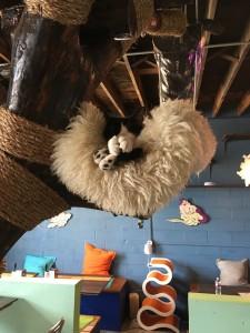 Blue Cat Cafe Austin Tx Cat Rescue.