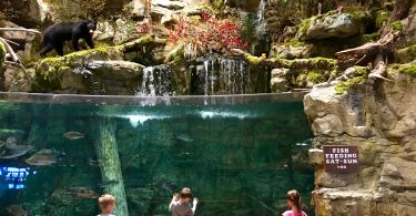 Bass Pro Outdoor World Round Rock TX
