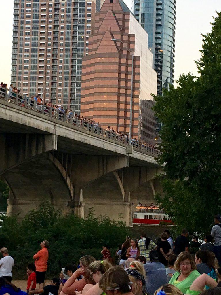 Congress Bridge Bat Watching