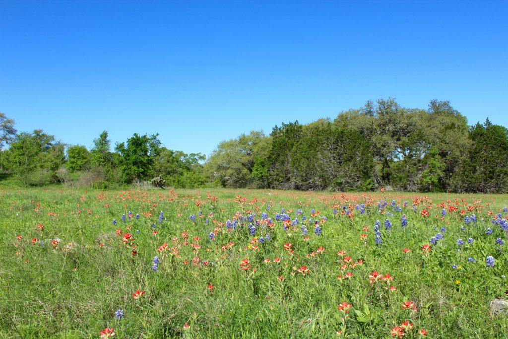 Texas Wildflowers at Lady Bird Johnson Wildflower Center