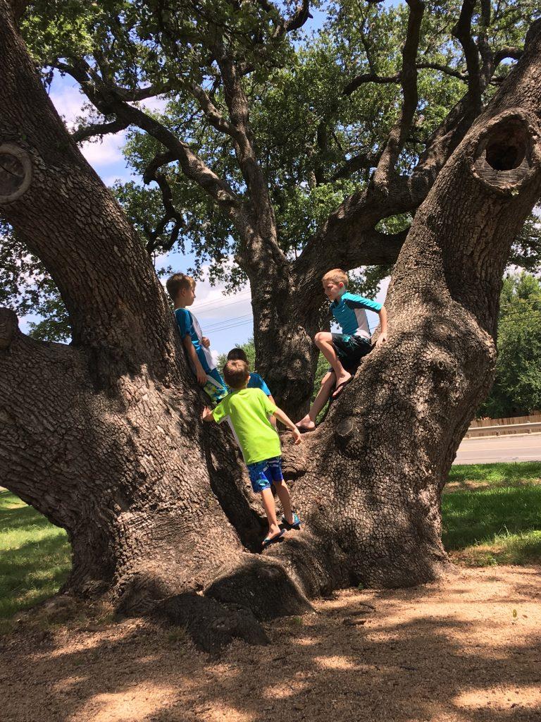Shakes Cedar Park