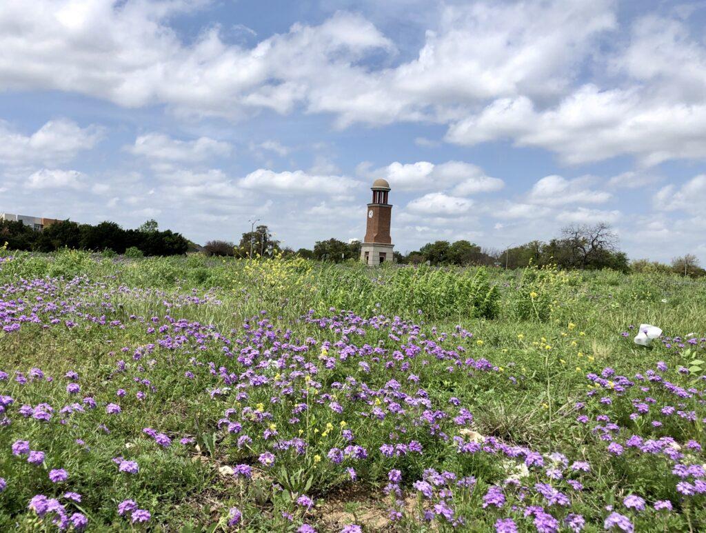 Cedar Park Wildflowers